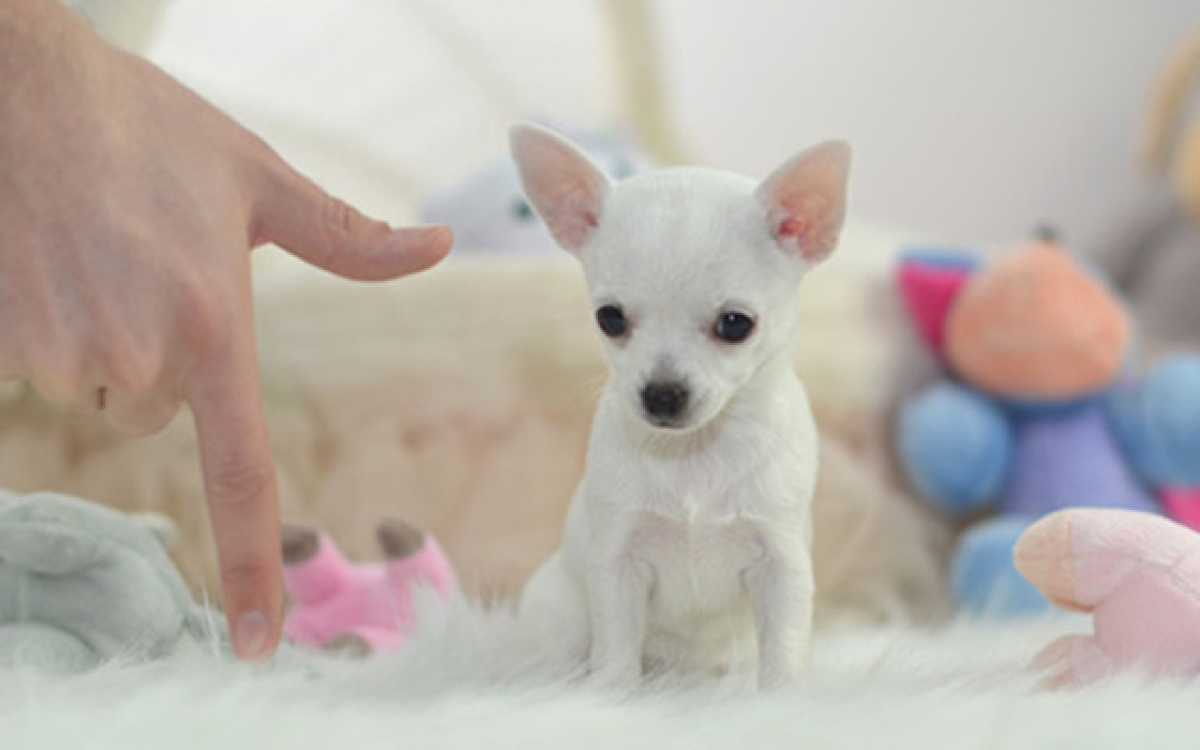 Small Dogs For Sale In Alabama