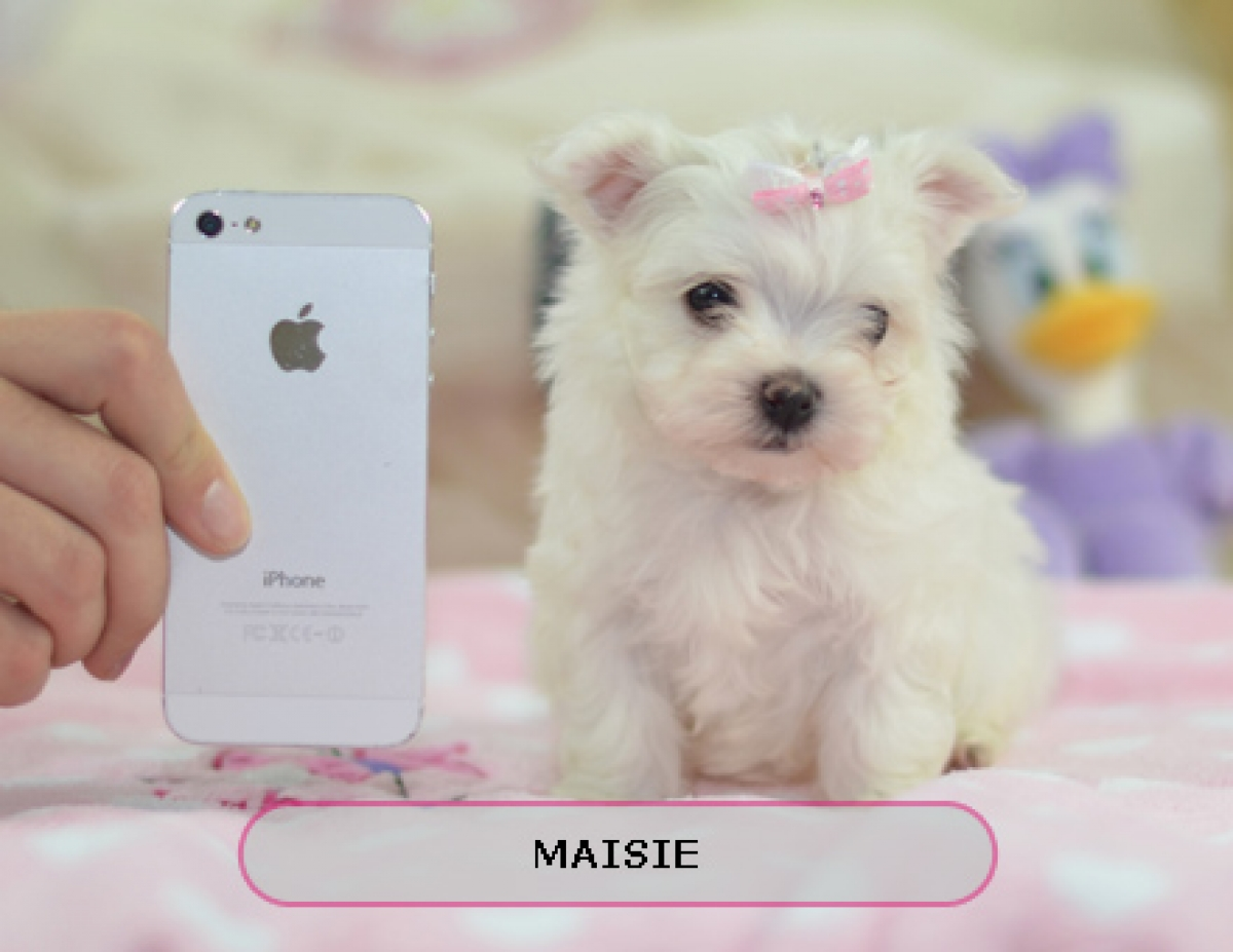 Image Gallery order a puppy