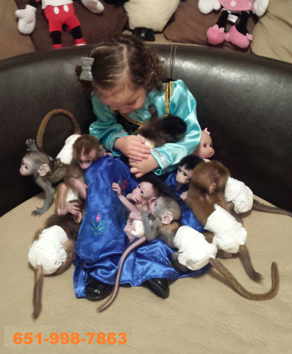 lovely babies capuchin monkeys for sale - exotic pets - texas