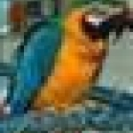 I have a sweet female blue and gold macaw for adoption.