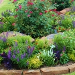 Weed Control & Lawn Health Services in Oklahoma
