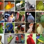 selling exotic parrots and fertile eggs