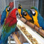 Available fertile parrots eggs & baby parrots, macaws for sale online (Best Online Pets Shop)